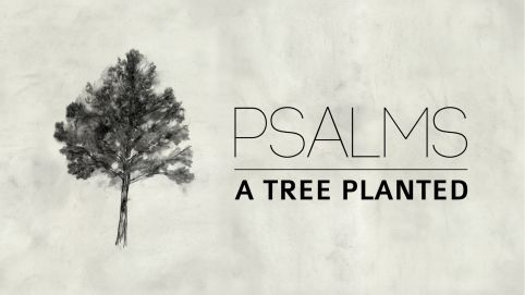 Psalms: A Tree Planted